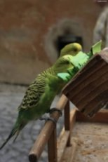 So-called Parrot Slips as fortune teller: parrots choose the paper with the text which best fits your future